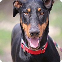 Adopt A Pet :: Gillis - Fillmore, CA
