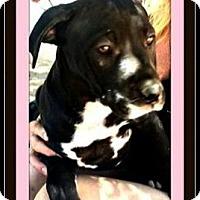 Adopt A Pet :: Lilymae - Rancho Cucamonga, CA