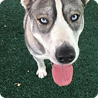 Adopt A Pet :: Balto - Chula Vista, CA