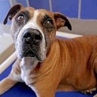 Adopt A Pet :: DOT - Austin, TX