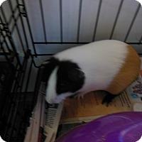 Adopt A Pet :: Mabel - Olivet, MI