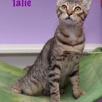 Adopt A Pet :: Talie - Baton Rouge, LA