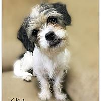 Adopt A Pet :: Megan - Pascagoula, MS