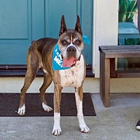 Adopt A Pet :: Van Gogh - Pacific Grove, CA