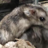 Adopt A Pet :: Bazin - Green Bay, WI