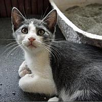 Adopt A Pet :: Oliver - Oakhurst, NJ