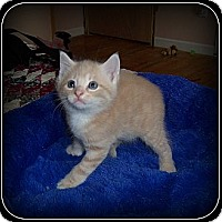Adopt A Pet :: Jelly Bean - HOW ADORABLE!! - South Plainfield, NJ
