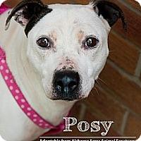 Adopt A Pet :: Posy - Salem, OH