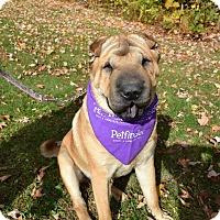 Adopt A Pet :: Murphy - Newport, VT