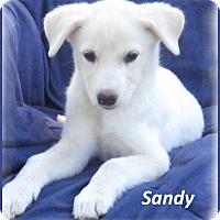 Adopt A Pet :: Sandy - Marlborough, MA
