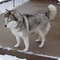 Adopt A Pet :: Sarah - Plano, TX