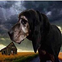 Adopt A Pet :: TYLER - Fairfield, CA