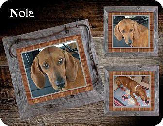 Redbone Coonhound Mix Dog for adoption in Ontario, Ontario - Nola -ADOPTED!!