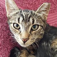 Adopt A Pet :: Puss - Fishkill, NY