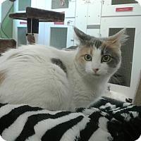 Adopt A Pet :: Melena - San Leon, TX