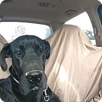 Adopt A Pet :: Gypsy Rose - Mesa, AZ