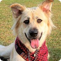 Adopt A Pet :: Caddy - San Francisco, CA