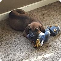 Adopt A Pet :: Duck - Brooklyn Center, MN