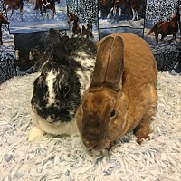 Other/Unknown Mix for adoption in Idaho Falls, Idaho - Bambi and Charolotte