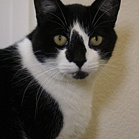 Adopt A Pet :: PandaBear - Colorado Springs, CO