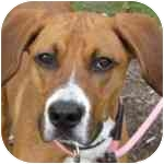 Hound (Unknown Type) Mix Dog for adoption in Eatontown, New Jersey - Renzo