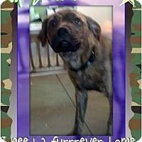 Adopt A Pet :: Malu - Lakeland, FL