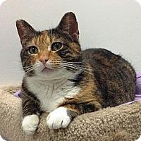 Adopt A Pet :: Ruthie - western, MN