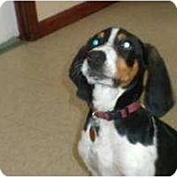 Adopt A Pet :: Elvis - Douglas, MA