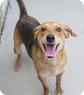 Hound (Unknown Type)/Foxhound Mix Dog for adoption in Elizabeth City, North Carolina - Gloria  ASAP