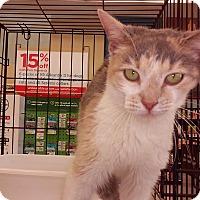 Adopt A Pet :: Emory - Woodstock, GA