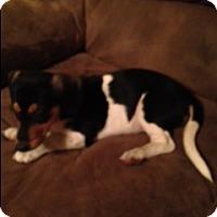 Adopt A Pet :: Makita - Marietta, GA