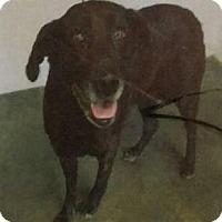 Adopt A Pet :: Jazz - Canoga Park, CA