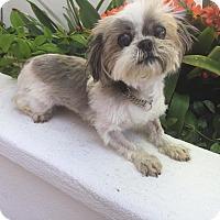 Adopt A Pet :: DORI - Los Angeles, CA