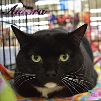 Adopt A Pet :: Aurora - Washington, PA