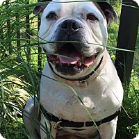 Adopt A Pet :: Reese - Newtown, PA