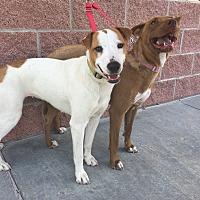 Adopt A Pet :: Sugar - Oklahoma City, OK