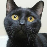 Adopt A Pet :: Piper - Dodgeville, WI