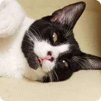 Adopt A Pet :: Stephanie - Mission Viejo, CA