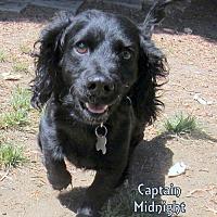 Adopt A Pet :: Captain MIdnight - Lindsay, CA