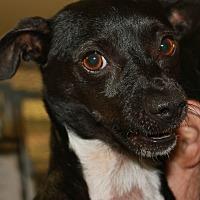 Adopt A Pet :: TUKI - Clayton, NJ