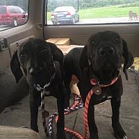 Adopt A Pet :: Mae - Burlington, NJ