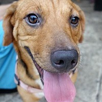 Adopt A Pet :: Twilight ~ Shy & Sweet - St Petersburg, FL