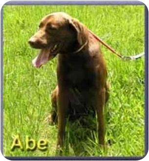 Retriever (Unknown Type) Dog for adoption in Aldie, Virginia - Abe