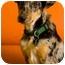 Photo 1 - Catahoula Leopard Dog Mix Puppy for adoption in Portland, Oregon - Tripper