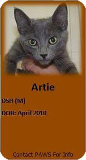 Domestic Shorthair Cat for adoption in Portage la Prairie, Manitoba - Artie