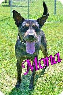 Cattle Dog Mix Dog for adoption in Sidney, Ohio - Mona