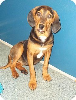 Bloodhound Mix Dog for adoption in Warrenton, North Carolina - Mary