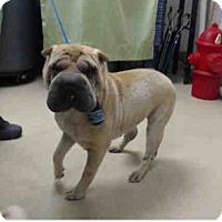 Adopt A Pet :: Lotus - Houston, TX