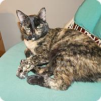 Adopt A Pet :: Manxy - Phoenix, AZ