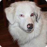 Adopt A Pet :: Ariat - Minneapolis, MN